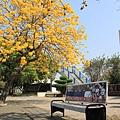 黃金風鈴木 (275)