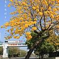 黃金風鈴木 (277)