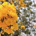黃金風鈴木 (284)
