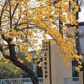 黃金風鈴木 (118)