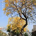 黃金風鈴木 (296)
