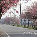 土庫櫻花大道 (76)