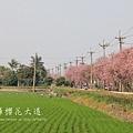 土庫櫻花大道 (83)