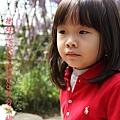 梅峰農場紫藤花 (4)