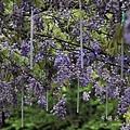 清境星巴克小瑞士花園 (54)