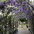 清境星巴克小瑞士花園 (59)