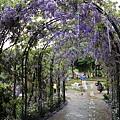清境星巴克小瑞士花園 (60)