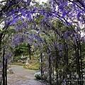清境星巴克小瑞士花園 (76)