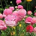 梅峰農場春之饗宴 (54)