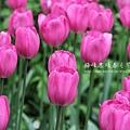 梅峰農場春之饗宴 (85)