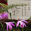 梅峰農場春之饗宴 (127)