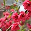 梅峰農場春之饗宴 (193)