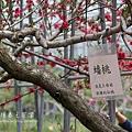 梅峰農場春之饗宴 (204)