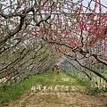 梅峰農場春之饗宴 (203)