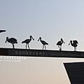 七股黑面琵鷺保育中心 (20)