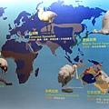 七股黑面琵鷺保育中心 (38)