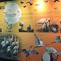 七股黑面琵鷺保育中心 (43)