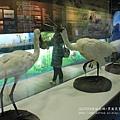 七股黑面琵鷺保育中心 (47)