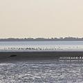 七股黑面琵鷺保育中心 (113)