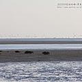 七股黑面琵鷺保育中心 (124)