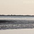 七股黑面琵鷺保育中心 (125)