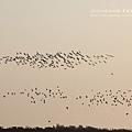 七股黑面琵鷺保育中心 (135)