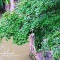 楓橋勝蹟+歐尚商場 (24)