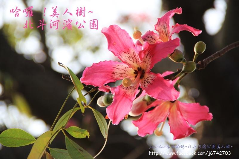 北斗美人樹~ (17).JPG