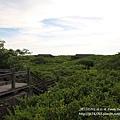新豐紅樹林遊憩區 (18)