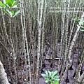 新豐紅樹林遊憩區 (34)