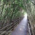 新豐紅樹林遊憩區 (37)