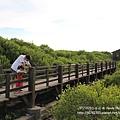 新豐紅樹林遊憩區 (79)
