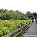 新豐紅樹林遊憩區 (98)
