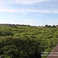新豐紅樹林遊憩區 (112)