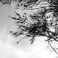 新豐紅樹林遊憩區 (118)