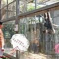 竹市立動物園遊 (37)