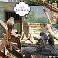 新竹市立動物園遊 (66)