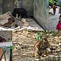 徐妹5Y1M在新竹市立動物園001