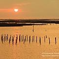三訪東石漁人碼頭8 (226)