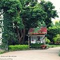卓蘭花露休閒農場+薑麻園 (7)