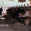 大山牧場大象牛排 (29)