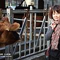 大山牧場大象牛排 (43)