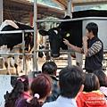 大山牧場大象牛排 (72)