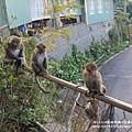 烏山獼猴保護區草山月世界 (38).JPG