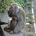 烏山獼猴保護區草山月世界 (54).JPG
