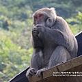 烏山獼猴保護區草山月世界 (59).JPG