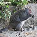 烏山獼猴保護區草山月世界 (61).JPG