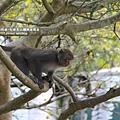 烏山獼猴保護區草山月世界 (63).JPG