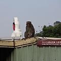 烏山獼猴保護區草山月世界 (64).JPG