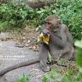 烏山獼猴保護區草山月世界 (65).JPG